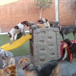 Go dog la 60 photos pet boarding pet sitting 1728 for Best dog boarding los angeles