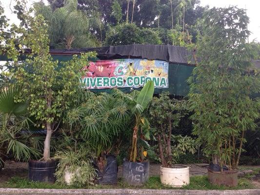 Viveros corona jardineros turquesa 2455 zapopan for Viveros en jalisco