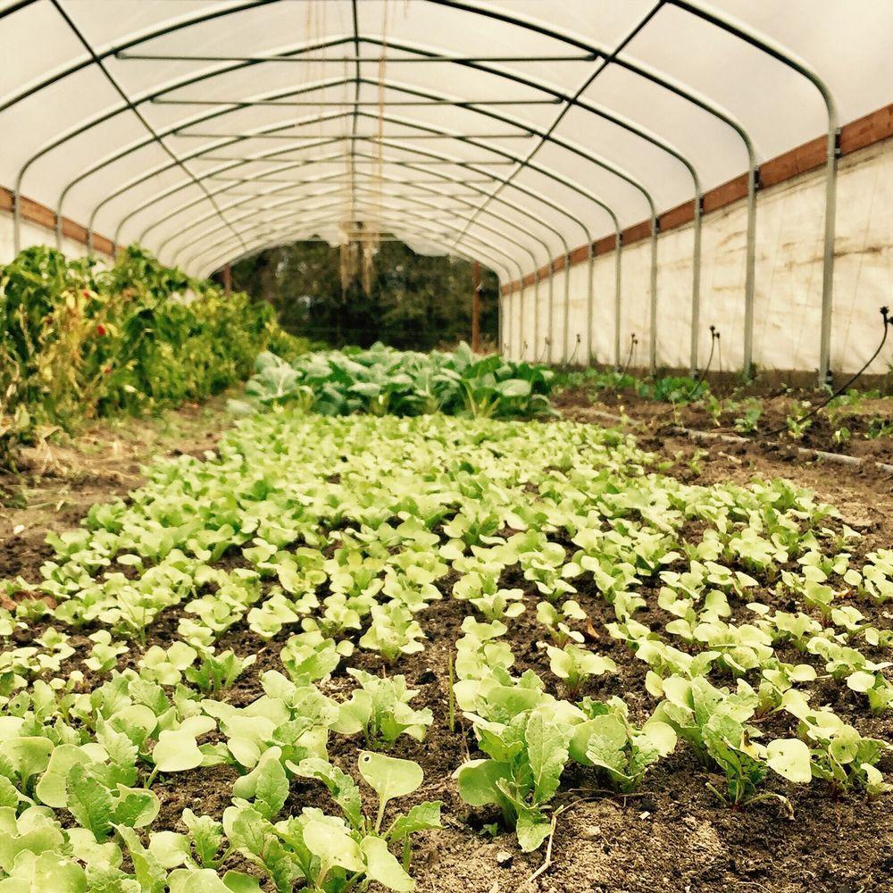 Babe and Sage Farm: 1021 Nitrogen Rd, Gordon, GA