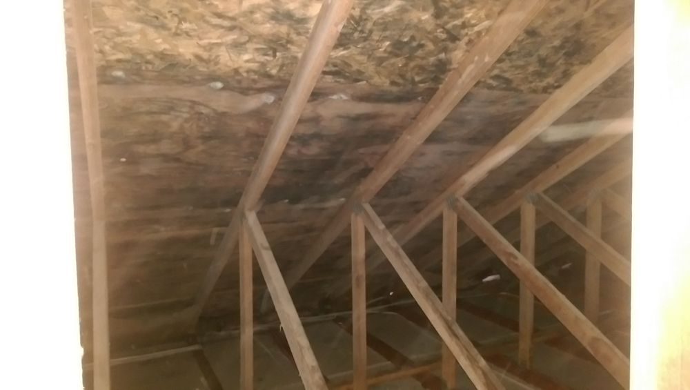 Photo Of Pure Environmental Portland Or United States Attic Mold Is Extremely