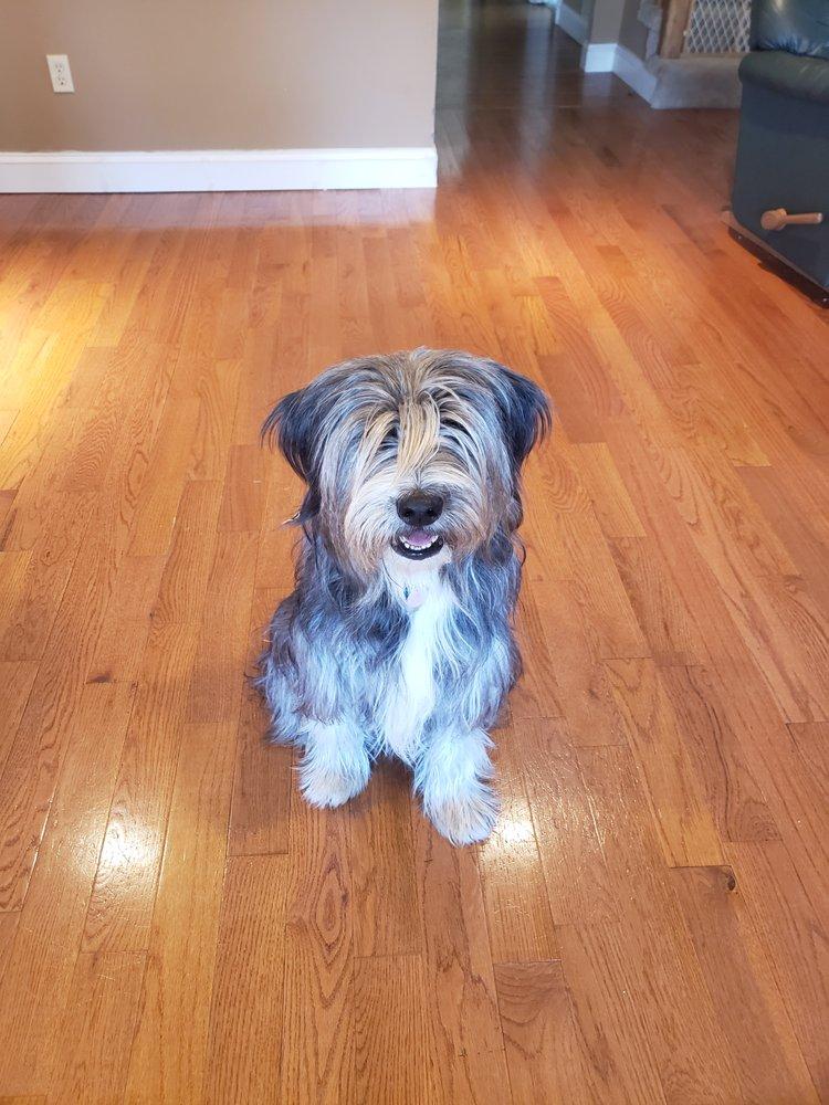 Best Buddies Dog Training: 3847 Hwy 53, Hoschton, GA
