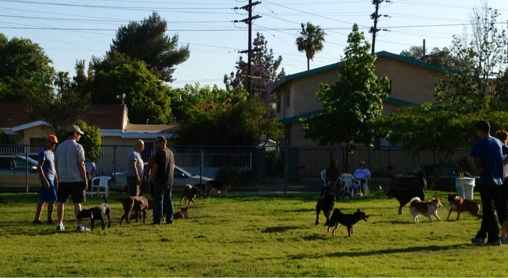 Dog Park In Los Angeles Off Leash
