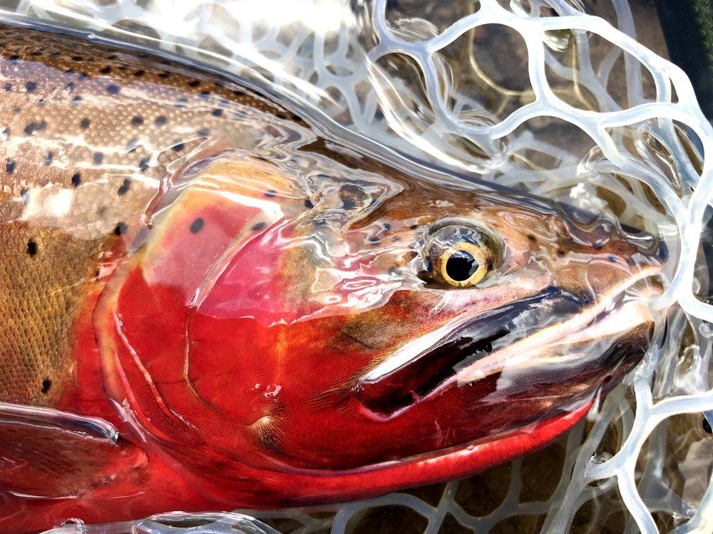Lost River Angler: 22 N Main St, Beaver, UT