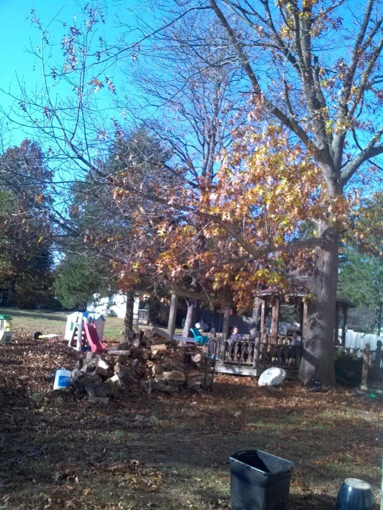 Nixa Mo Elm Tree Removal Yelp