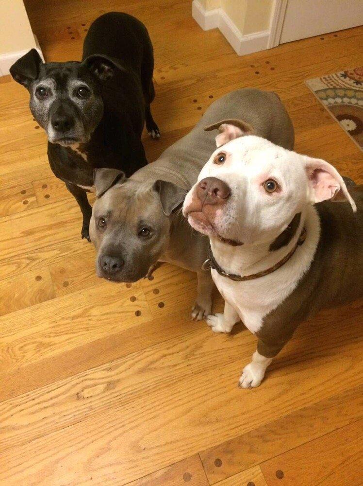 John Gagnon's Pet Resort: 227 Upton Rd, Colchester, CT