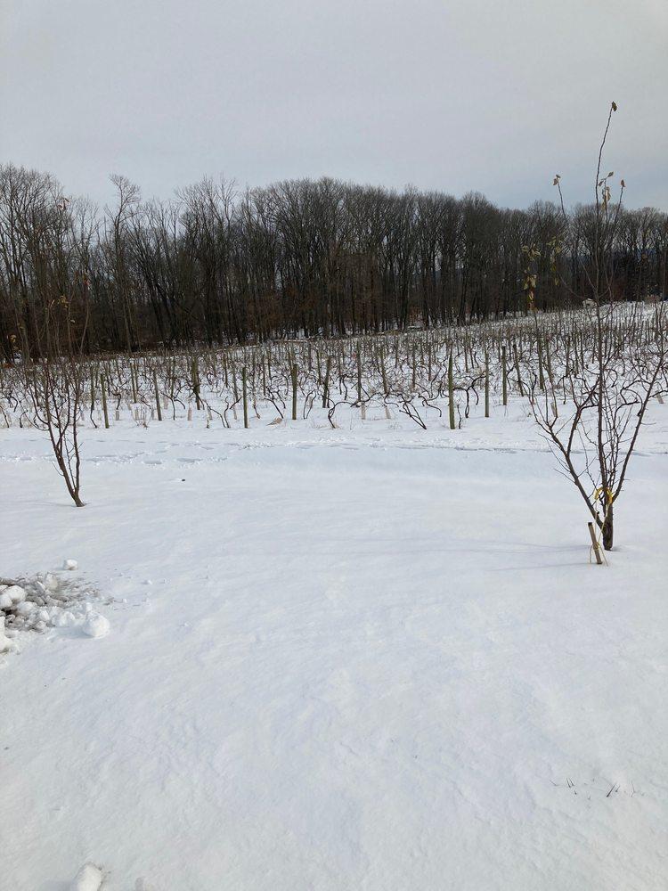 Vivat Alfa Winery: 3612 Stump Rd, Doylestown, PA