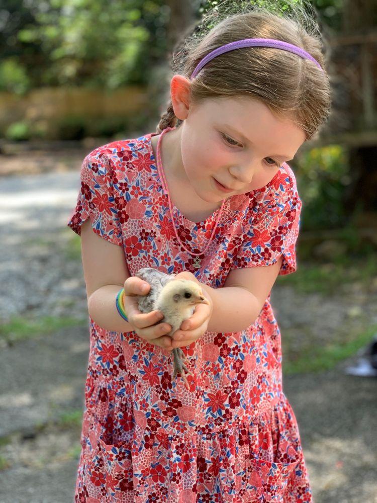 Farmer Sue & The Art Barn at Morning Glory Farm: 208 Roper Rd, Canton, GA