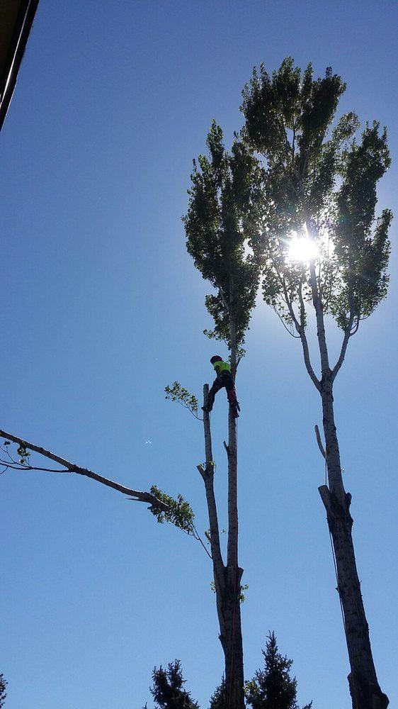 City of Treez Tree Service: 2106 N 35th, Boise, ID