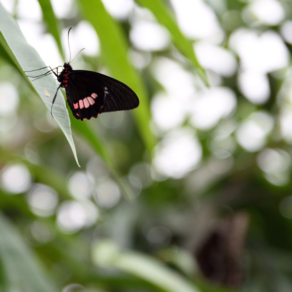 Brookside Gardens 646 Photos 138 Reviews Botanical Tiket Butterfly Park Insect Kingdom 1800 Glenallan Ave Wheaton Md Phone Number Last Updated November 29 2018 Yelp