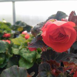 Arch Greenhouses - (New) 21 Photos - Nurseries & Gardening