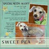 Grosse Pointe Animal Adoption Society: 20204 Harper Ave, Harper Woods, MI