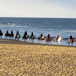Virginia Beach Horseback 152 Photos