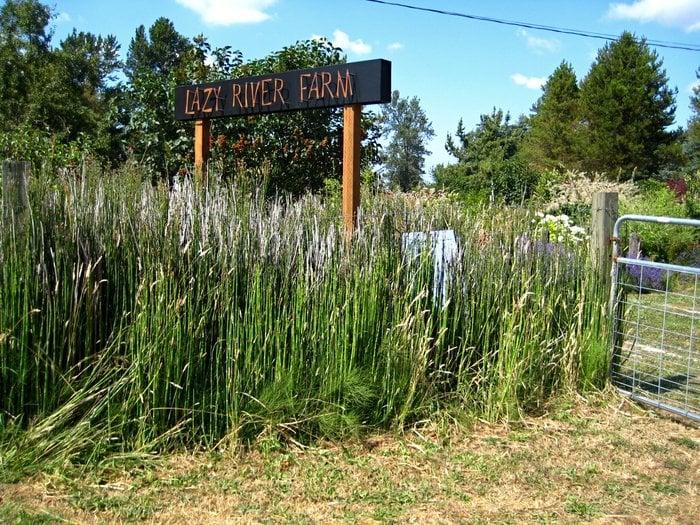 Lazy River Farm: 27010 78th Ave S, Kent, WA