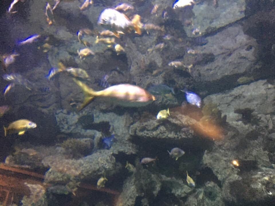 Mandalay Bay Shark Reef Aquarium. - Yelp