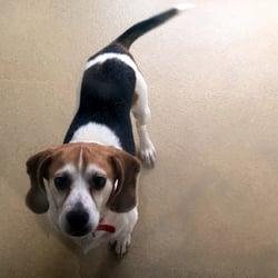 Animal Shelter of Orange County - 10 Reviews - Animal ...