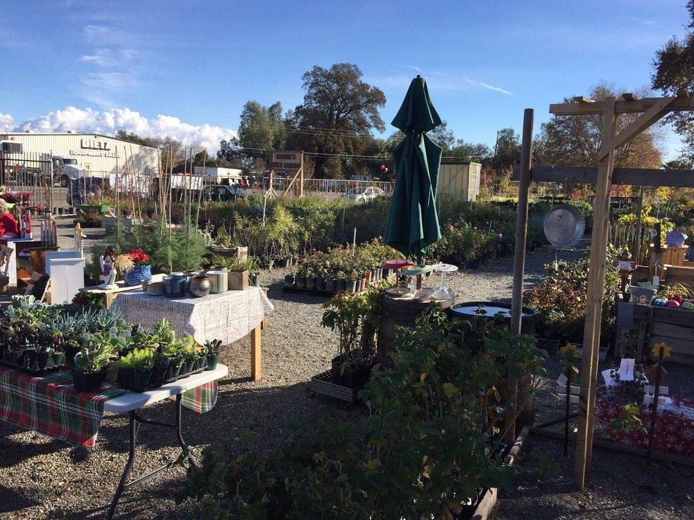 Goodin's Rock Garden: 9869 Hwy 99W, Proberta, CA