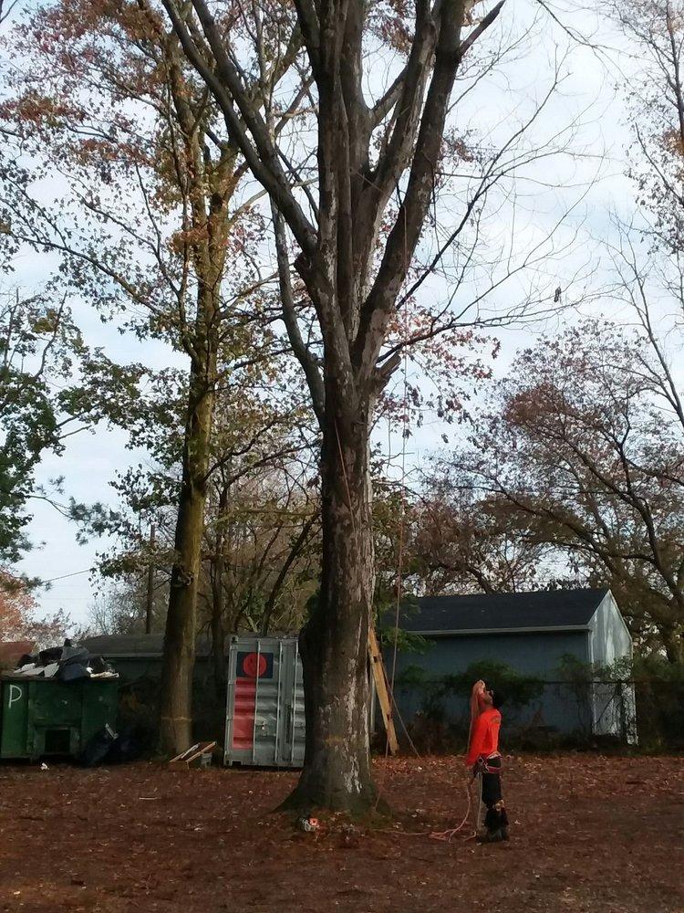 Vince's Tree & Landscaping Service: Blackwood, NJ