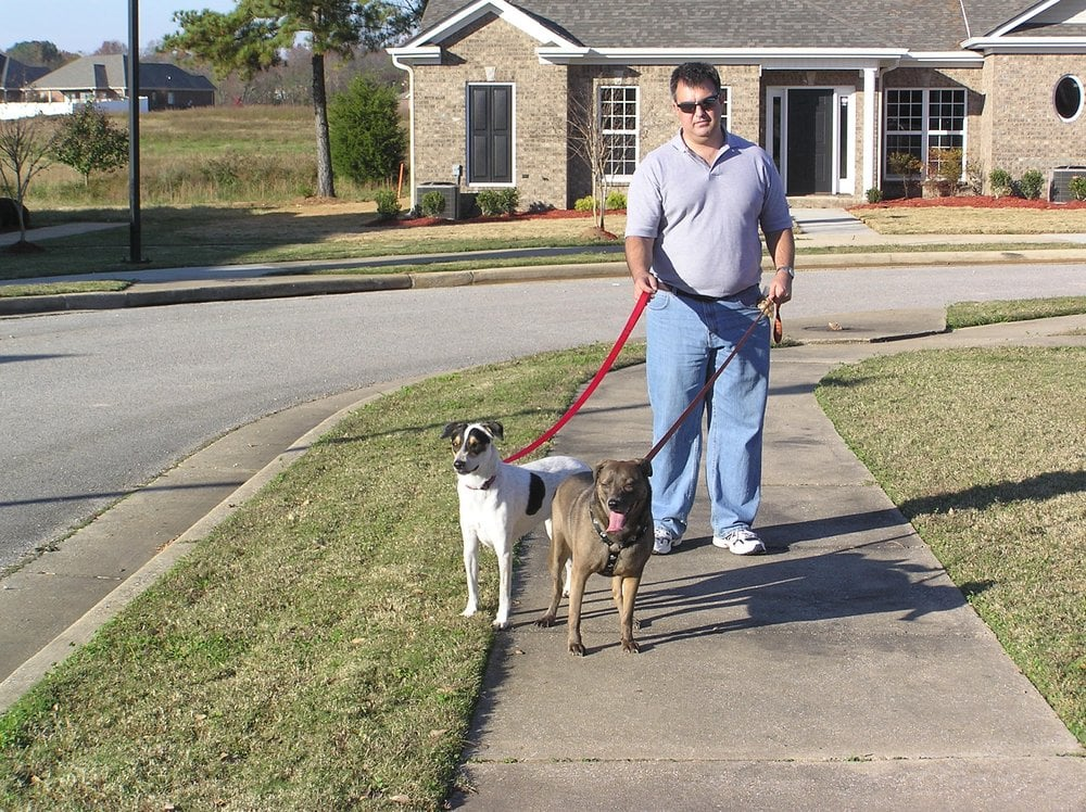 Dog walking service yelp for Professional dog walking service