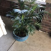 cd03ecce4 Photo of Menards - Indianapolis, IN, United States. This palm was on sale