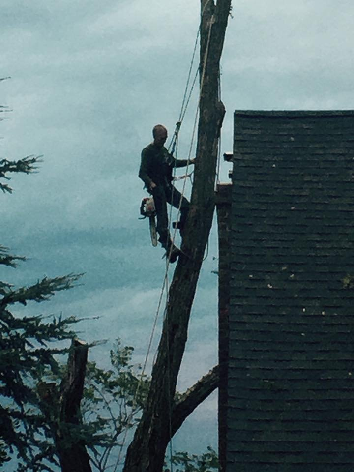 C & A Tree Service: 1313 28th St, Huntington, WV
