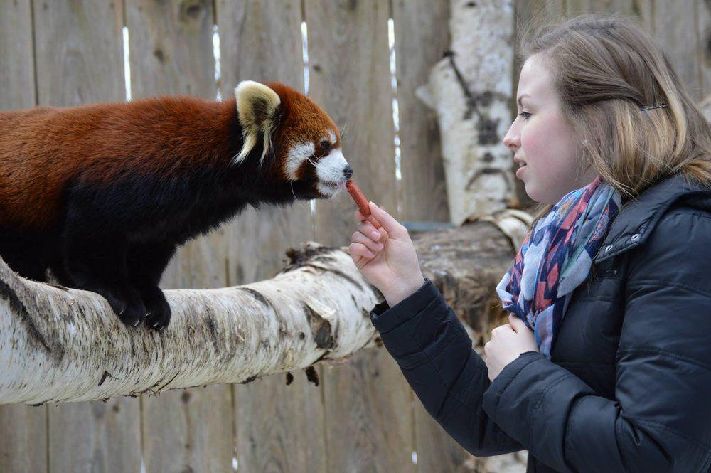 Social Spots from Utica Zoo