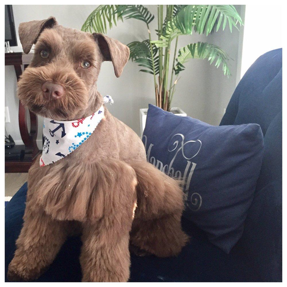 Nashville Pet Salon: 2704 Larmon Ave, Nashville, TN