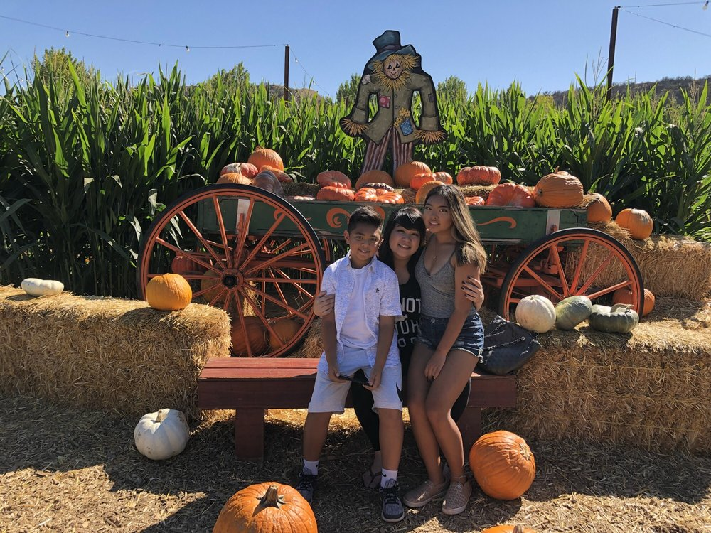Live Oak Canyon Pumpkin Patch and Christmas Tree - Live Oak Canyon Pumpkin Patch And Christmas Tree Farm - 576 Photos