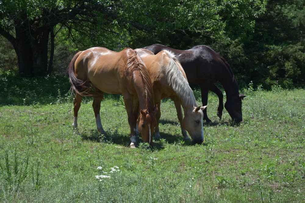 Equine Adventure At  Salt Creek Ranch: 4215 E 245th St, Lyndon, KS