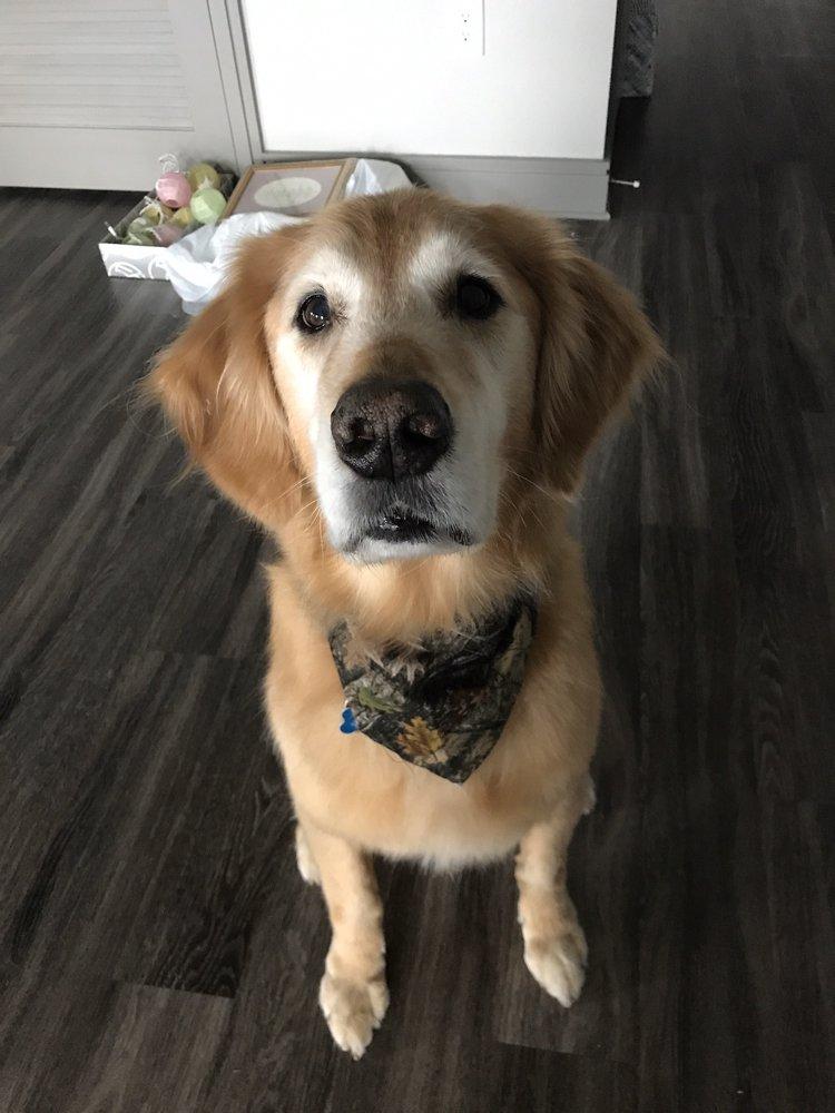 Loyal friend dog grooming