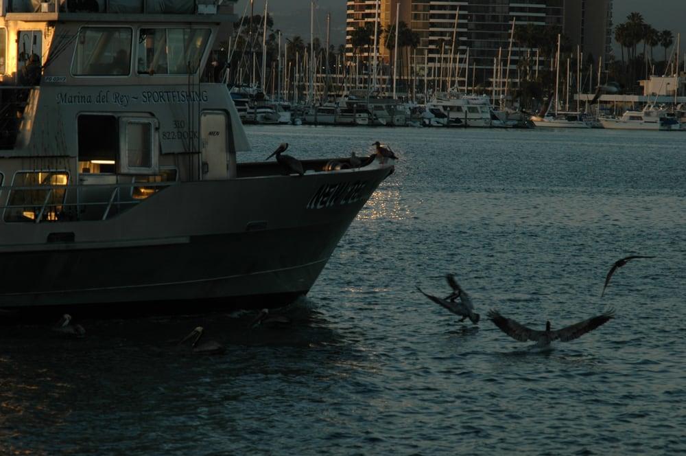Birds celebrate the return yelp for Marina del rey fishing report