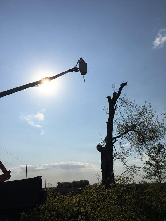 Southern Oaks Tree & Crane Service: Lone Tree, IA