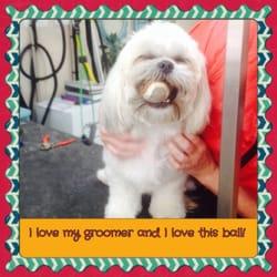 Pet Groomers Santa Rosa Beach Fl