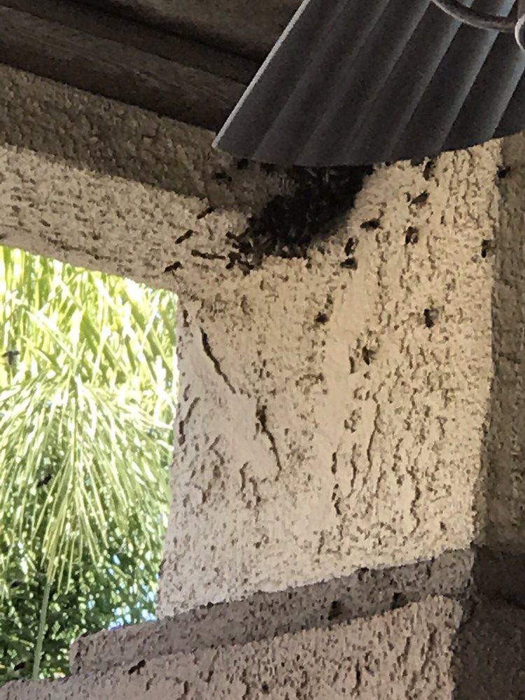 Bee Guy Travis: 33516 Breckenridge Trl, Wildomar, CA