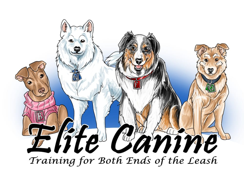 Elite Canine: 3800 Reynolda Rd, Winston-Salem, NC