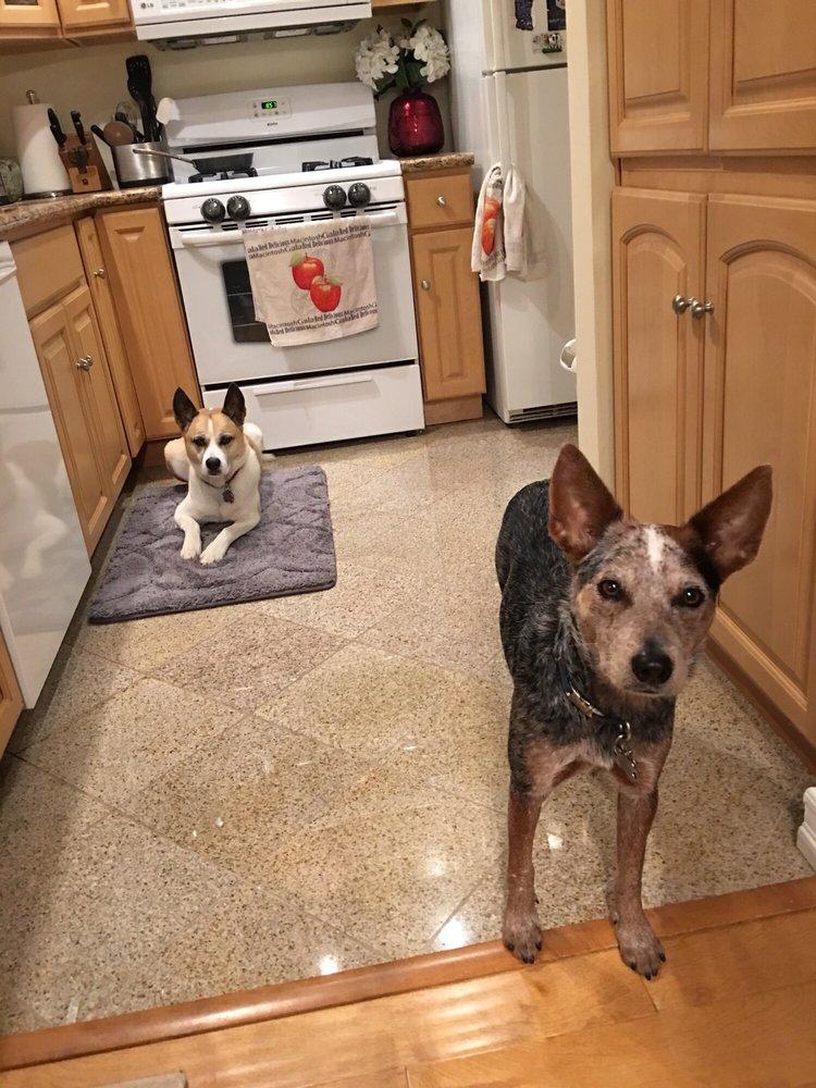 The Dog Ranger: 2698 Glenrose Ave, Altadena, CA
