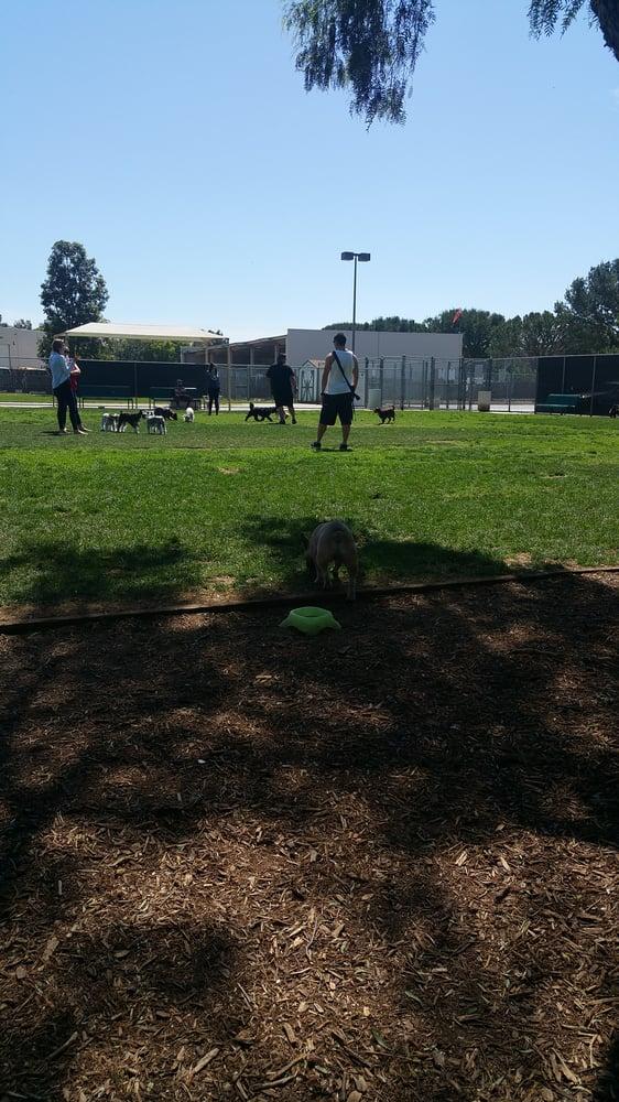 Irvine Central Bark Dog Park Irvine Ca