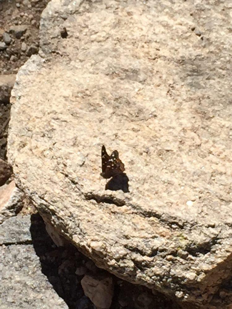 Ventana Canyon Hiking Trail