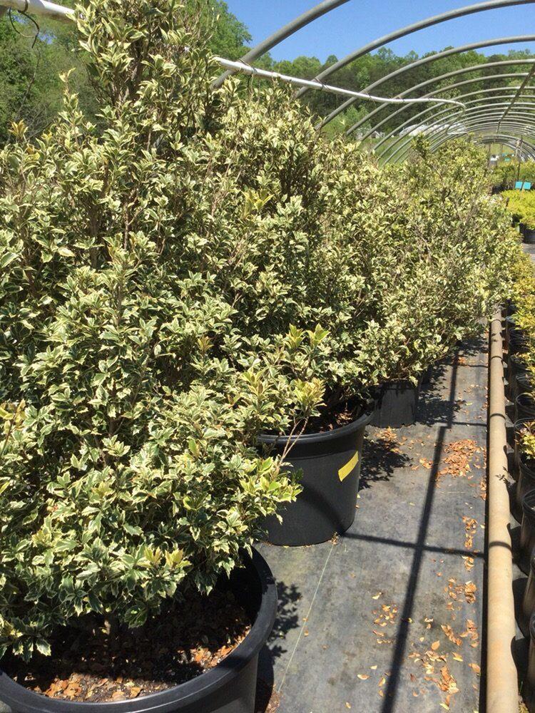 Eakers Nurseries & Tree Farm: 2760 Hwy 274, Cherryville, NC