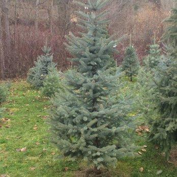 photo of sheltons christmas tree farm cashmere wa united states can - Cashmere Christmas Tree