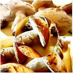 l´osteria di casa chianti - 15 fotos - toskanische küche - via delle
