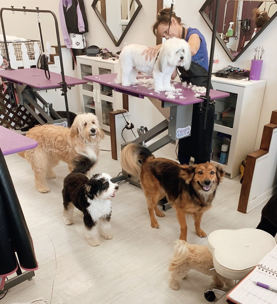Valley of the Paws Pet Grooming