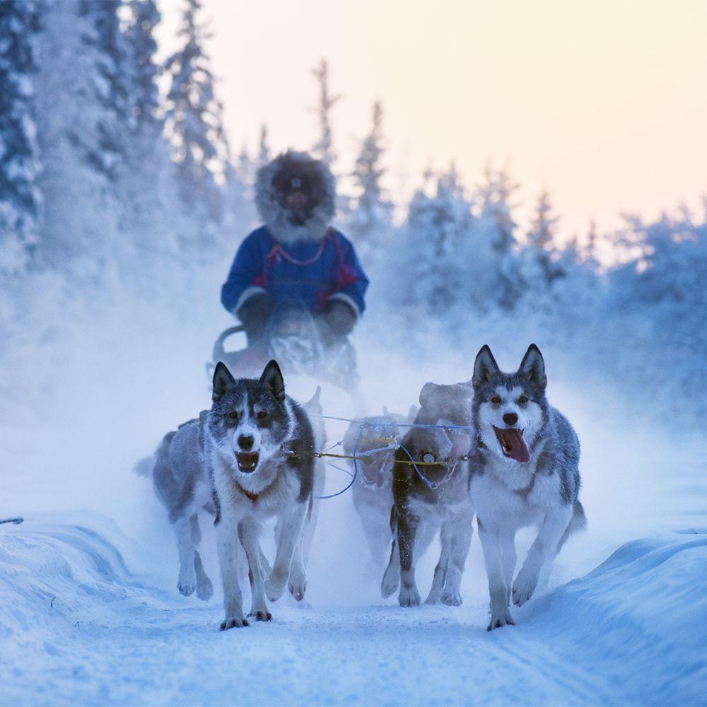 Trail Breaker Kennel: 5880 Airport Industrial Rd, Fairbanks, AK