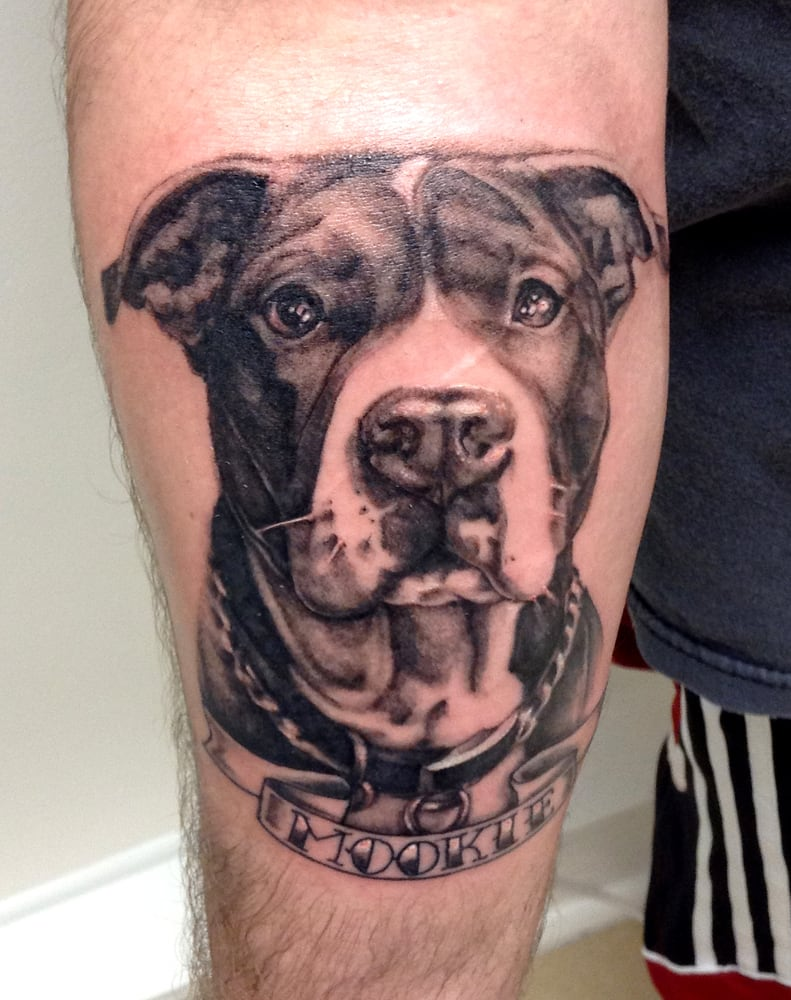 Pitbull Dog Portrait by Amber Opal - Yelp