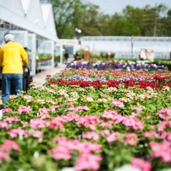 Photo Of Pesche S Flowers Des Plaines Il United States