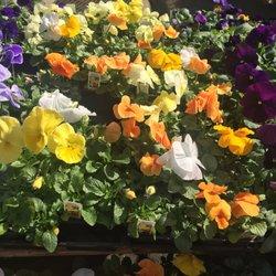 Merrifield Garden Center 43 Photos 71 Reviews Nurseries Gardening 12101 Lee Hwy