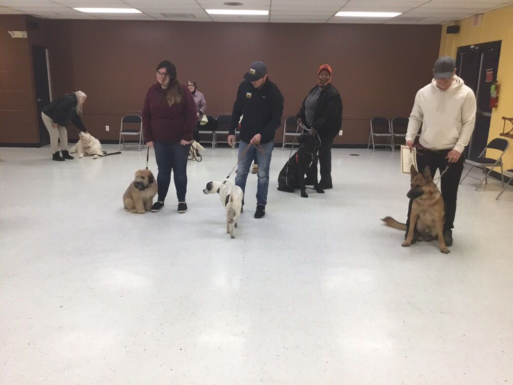 Black Dog K9 Training and Pet Services: Alsip, IL