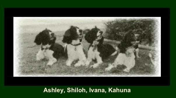 KJ Kennels Dog Boarding: 3658 State Rt, Woodville, NY