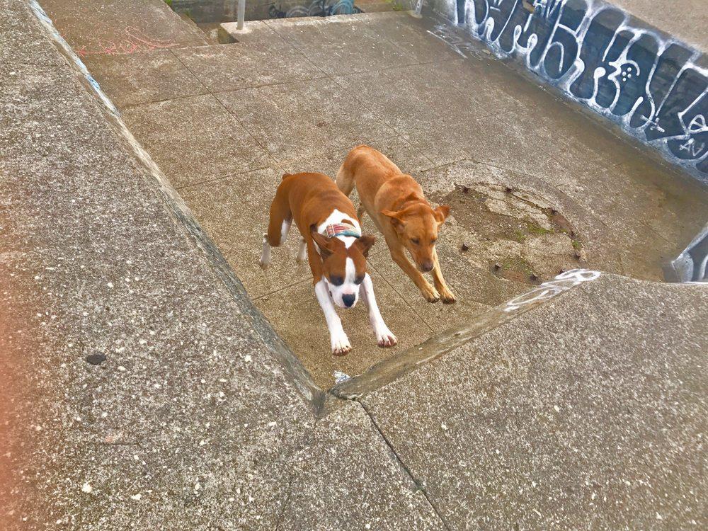 Elite Canine Dog Training