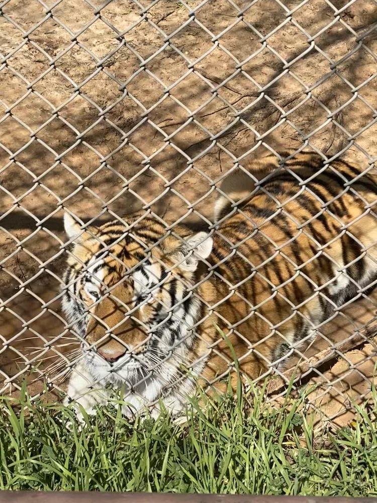 International Exotic Animal Sanctuary: Boyd, TX