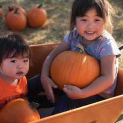 Fallbrook: 'charlie brown' to appear at fallbrook pumpkin patch.